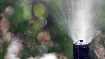 Wall Mural - Automatic sprinkler spraying water on green lawn, close-up on irrigation sprinkler head, 4k