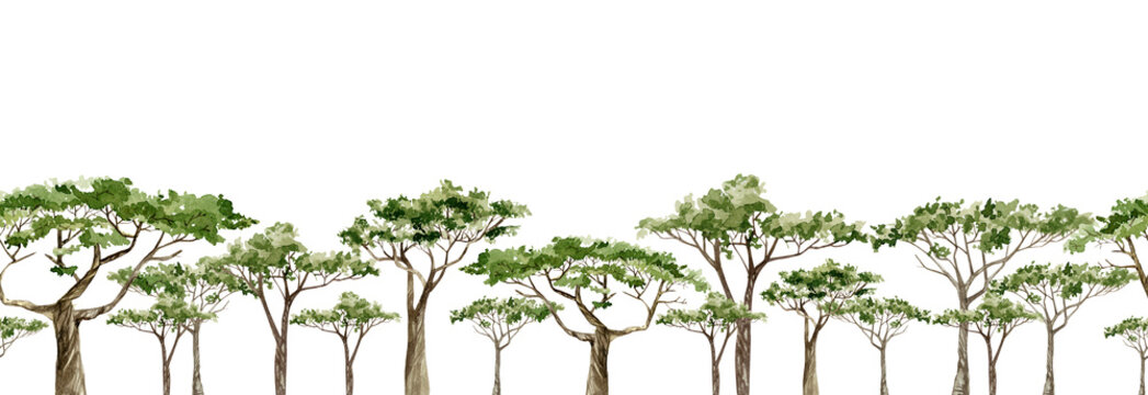 Watercolor Africa trees horazontal banner. Hand drawn illustration of southern trees in the savannah for the web banner, greeting card, frame, seamless background.