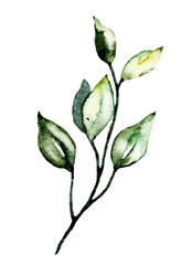 Leaf watercolor. Hand painting floral botanical drawings, foliage illustration. Leaves isolated on white background.