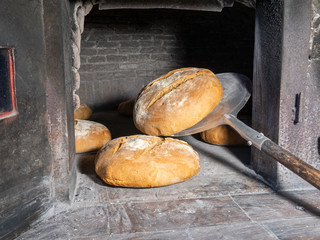 homemade bread freshly baked from a wood oven. Traditional Italian bread with sourdough