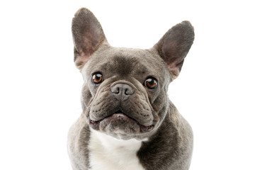 Deurstickers Franse bulldog Portrait of an adorable French Bulldog