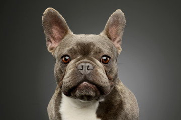 Foto op Plexiglas Franse bulldog Portrait of an adorable French Bulldog