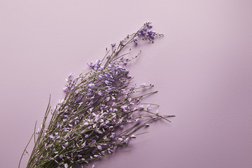 top view of beautiful wildflowers on violet background
