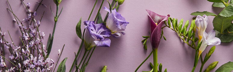 top view of beautiful flowers on violet background, panoramic shot Wall mural