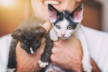Two young kittens on hands of man