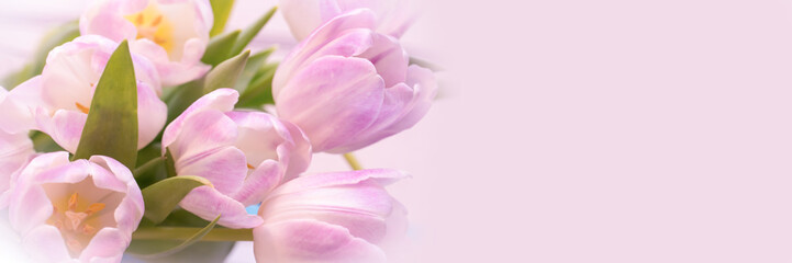 Bunch of pastel pink tulips close up, panoramic web banner with copy space