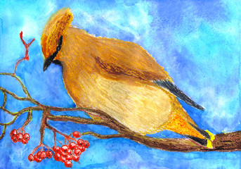 The waxwing sits on a mountain ash. Children's drawing, mixed media