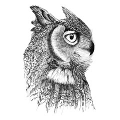 Aluminium Prints Owls cartoon Portrait of a noble owl in profile