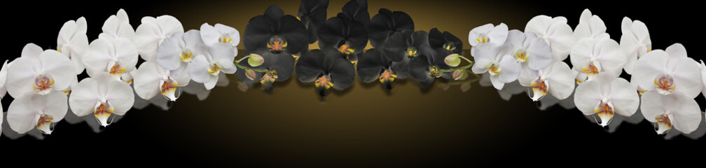 Stores photo Orchidée black and white orchid