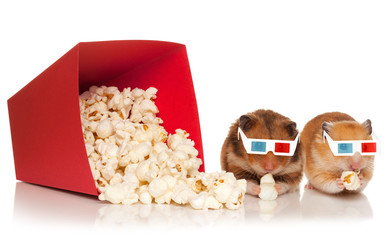 Two hamsters in 3d glasses chewing popcorn.