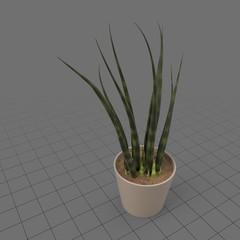 Succulent plant in planter