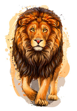 Lion. Artistic, color, realistic portrait of a lion walking forward on a white background with watercolor splashes.