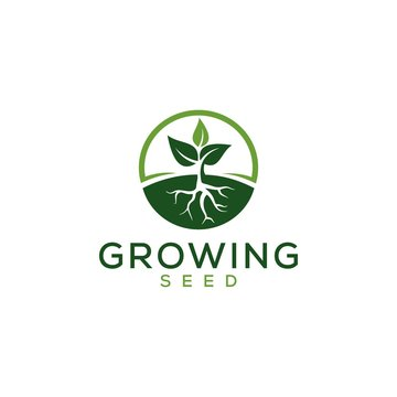 Growing Seed logo design vector , leaf , water and root simple concept with circle style inspiration download