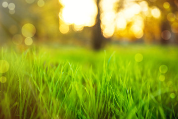 Papiers peints Vert chaux Bright green spring grass in park. Bokeh effect