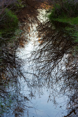 Winter trees reflecting in the water