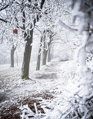 Nice winter scene covered with snow