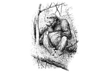 Gorilla - Vintage Engraved Illustration 1889