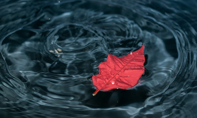 The red leaf floats on turquoise water. Splashes of water and waves Wall mural