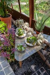 Jardin - plantes grasses sur uen table dans une serre