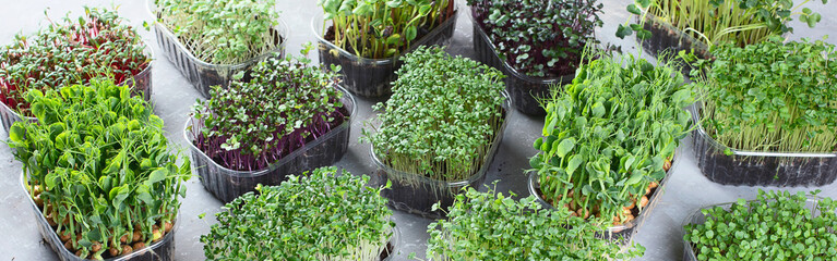 Papiers peints Jardin Differend types of Microgreens