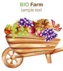 Bio farm composition with wooden wheelbarrow filled with artichoke, pumpkins, apple, grapes and leaves