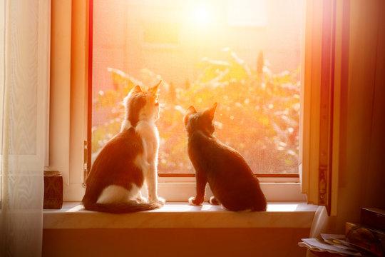 Cats sitting in window