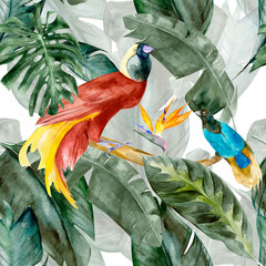 Tropical birds on the background exotic green flower hibiscus and monstera palm leaves, banana leaf. Print summer floral plant. Nature animals wallpaper. Seamless watercolor jungle pattern textile.