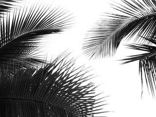 Wall Mural - beautiful palm leaf on white background