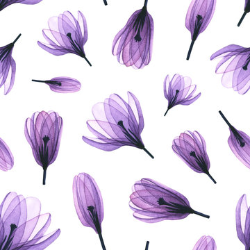 Seamless pattern with watercolor transparent crocus flowers. Hand drawn illustration isolated on white. Floral template is perfect for greeting card, wallpaper, fabric textile, interior design