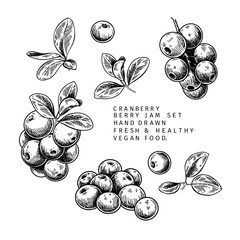 Hand drawn cranberry branch, leaf and berry. Engraved vector illustration. Cowberry, blueberry wild plant. Summer harvest, jam or mamalade vegan ingredient. Menu, package, cosmetic and food design.