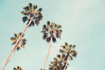 Palm trees over a blue sky minimal