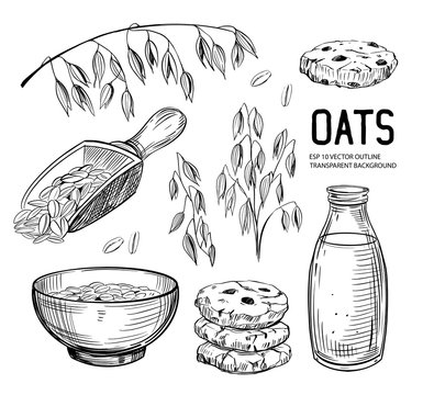 Set of oats objects. Oatmeal, cookies, milk, grains, plant. Vector outline with transparent background