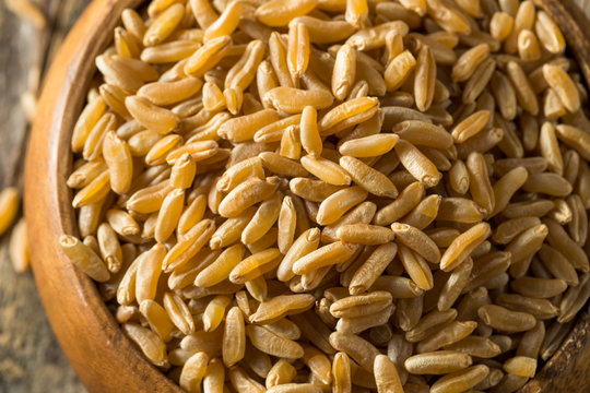 Dry Brown Organic Khorasan Wheat