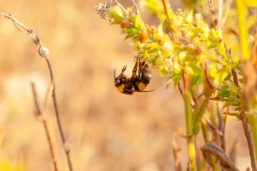 Beautiful Bee macro in green nature
