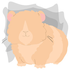 Picture of a hamster on a white background