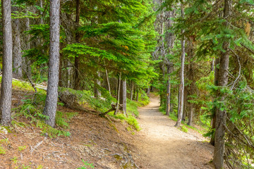 Fragment of Lightning Lake trail in Manning Park, British Columbia, Canada. Wall mural
