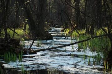 Rzeka po deszczu w Kampinoskim Parku Narodowym, Polska