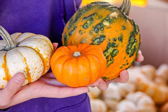 Girl holding assorted mini squash and pumpkins