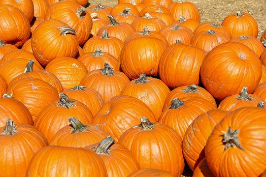 Small orange pumpkins for sale