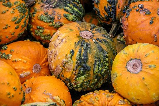 A warty goblin pumpkin