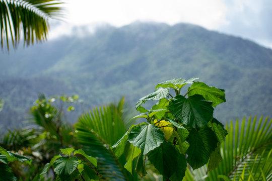 Top of Mountain Peaks in El Yunque Rainforest