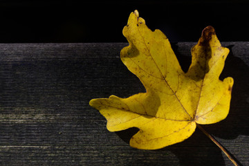 Close-up of a yellow autumnal leaf that glows on weathered wood and a dark background, with space for text