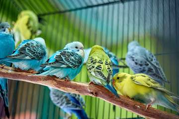 Close up of small caged colorful birds in pet store in morning sun
