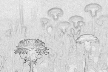 Dandelions on the lawn: a monochromatic picture in shades of gray-silvery metal. The two-dimensional image in grayscale, designed with effect of volumetric elements on the background