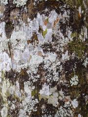Beach Tree Texture