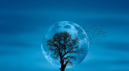 Wall Mural - Silhouette of lone tree with moon with full moon