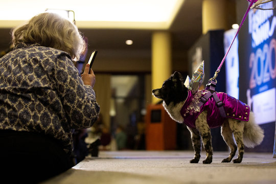 A woman photographs a dog on the runway stage at the 17th annual New York Pet Fashion Show