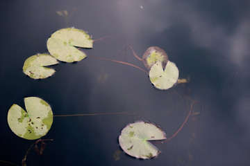 Spoed Fotobehang Waterlelies Mysterious dark pond with water lilies