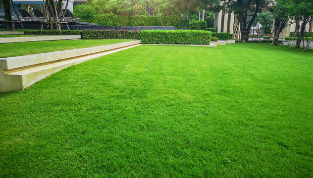 Smooth and fresh green grass lawn as a carpet in garden backyard, good care maintenance landscapes decorated with flowering plant on grey concrete container, shurb and bush under shading of the trees