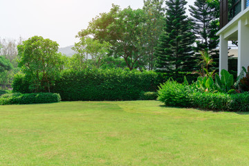 Fotobehang Tuin Fresh green grass smooth lawn as a carpet with curve form of bush, trees on the background, good maintenance lanscapes in a garden under cloudy sky and morning sunlight